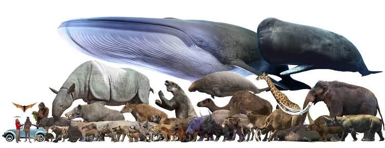 animali più grandi del mondo